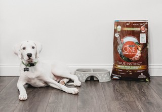 Petsmart Dog Food Brands: Find Best Choices For Your Pets