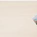 Target Photo Coupon: Get Print Coupon plus Free Shipping Code